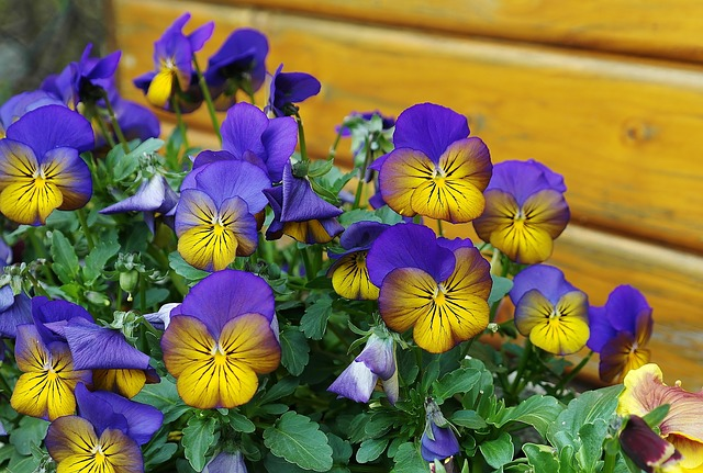 flores jardines Gáldar